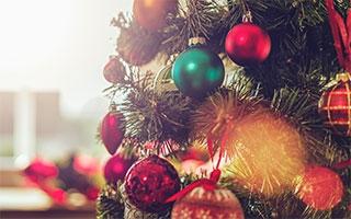 Weihnachtsbaum Fällen Berlin.Tipp Den Weihnachtsbaum Lange Grün Halten